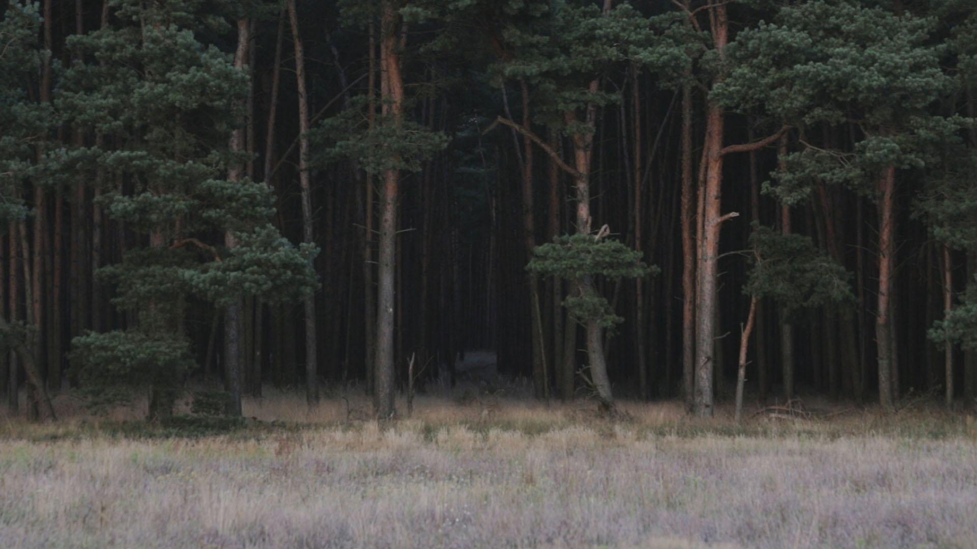 Hinter dem Wald