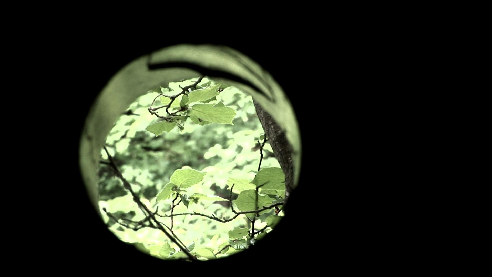 Ein Heim im Wald