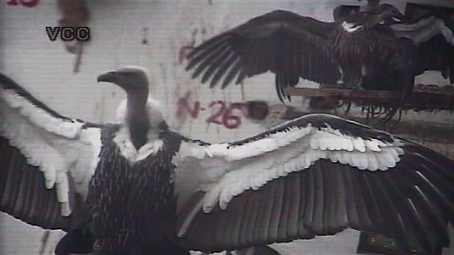 Requiem For A Bird