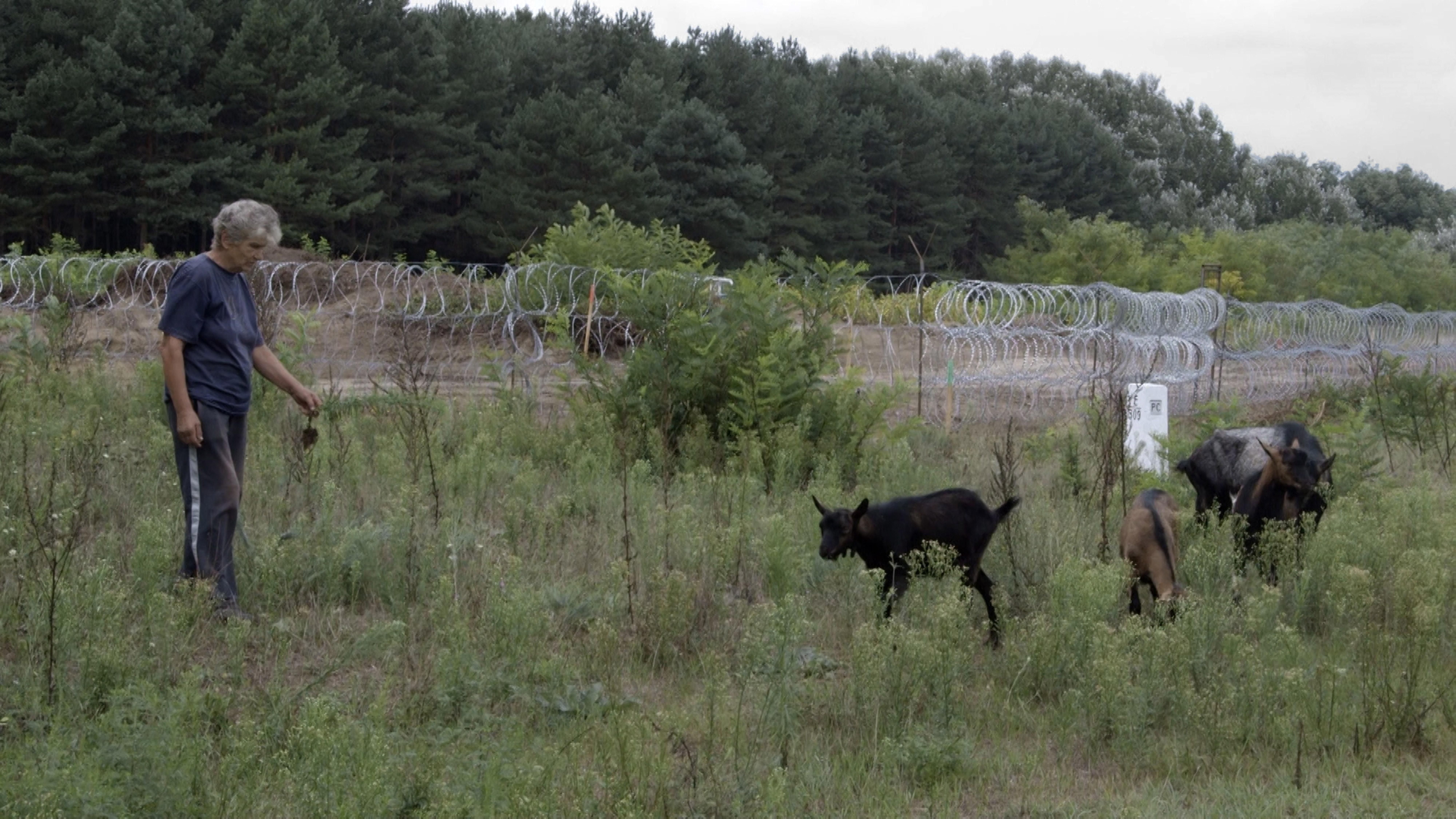 Kerítés – Fence